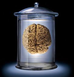 brainvat